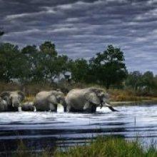 PUZZLE HEYE-PANORAMA-HERD OF ELEPHANTS